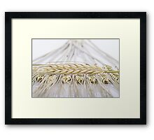 wheat ears cereals Framed Print
