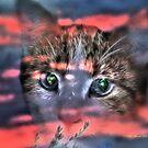 Those Eyes by Pat Moore