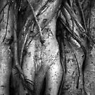 tree woman by Clare Colins