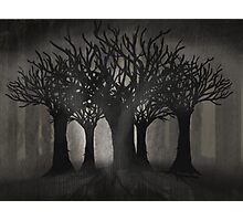 Dark Woods Photographic Print