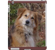 Adorbz Clumber Spaniel Collie (Rough)