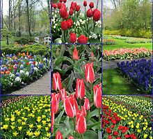 Keukenhof Collage featuring Pinocchio Tulips by BlueMoonRose