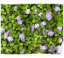 'Blue Groundcover' Poster