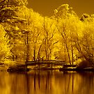 Autumn in IR by Hans Kawitzki