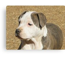 A Puppy Called Ginger Sparkles Canvas Print