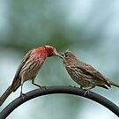 Beak to beak by Bonnie T.  Barry