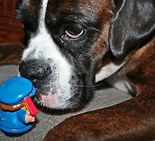 This is definately NOT a cookie!!!  -Boxer Dogs Series- by Evita