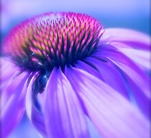 Cone Flower in Pastel by Linda Bianic