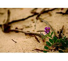 Dune Flower Photographic Print