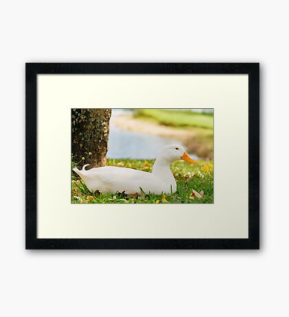 Sitting Duck Framed Print