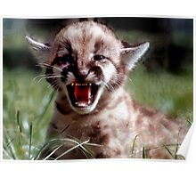 Mountain Lion cub Poster