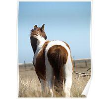 Assateague Stallion Poster