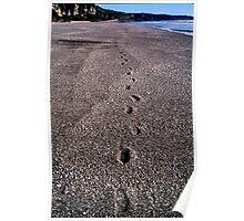 step lightly. westcoast, aotearoa Poster