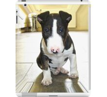 Tiny Miniature Bull Terrier