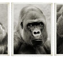 Great Apes Tribute. by Dennis Stewart