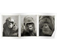 Great Apes Tribute. Poster