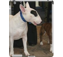 Cute Miniature Bull Terrier