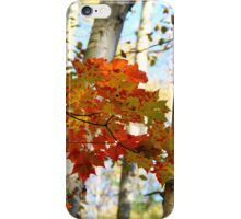 Harmony - Birch And Maple iPhone Case/Skin