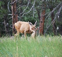 Mom and her fawn by Marlo510