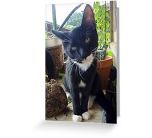 I'm perrrrfect for you! Greeting Card