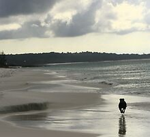 Murphy on a silver Captains Beach by danav