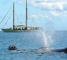 Mother and Calf - Humpback Whale by Barbara Burkhardt