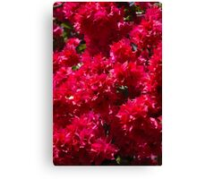 Begonia Flowers Canvas Print