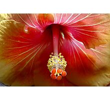 Hibiscus, Flower Photographic Print