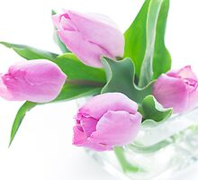 Pink tulips bouquet in vase isolated on white background by yumehana