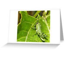 Tiny hopper  Greeting Card