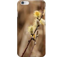 Pussy Willows - Catkins iPhone Case/Skin