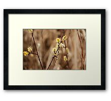 Pussy Willows - Catkins Framed Print