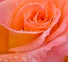 Peach delight by Rosalie Dale