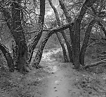 Secret Path by Jon  Johnson