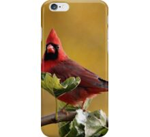 Alarmed  Northern Red Cardinal iPhone Case/Skin