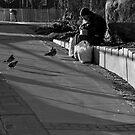 Bob's Birds by Jon  Johnson