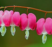 Pink hearts by Dipali S