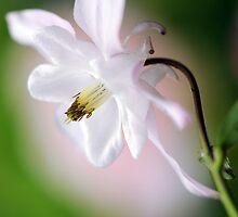 Spring Serenity by Jacky Parker