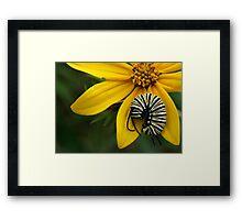 Caterpillar Nap Framed Print