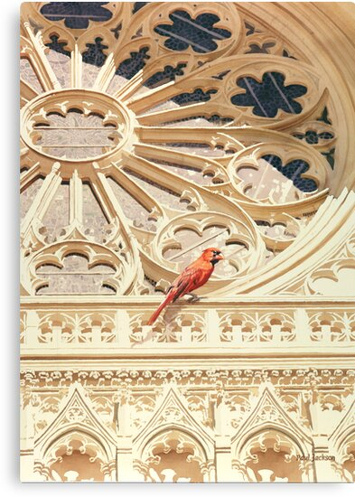 """""""The Cardinal"""" Watercolor by Paul Jackson"""
