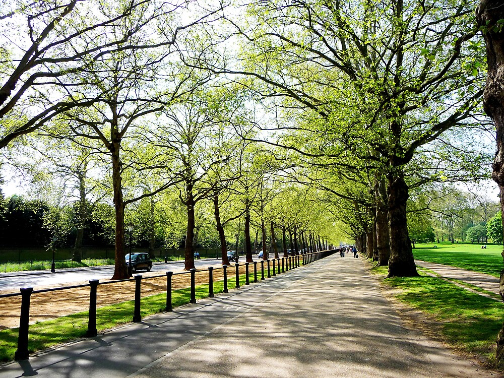 Tree Lined Avenue by Braedene