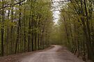 A Country Road~: in the first few weeks of Spring.. by Larry Llewellyn