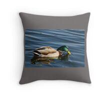 Mallard Drake Drinking in Grenadier Pond Throw Pillow