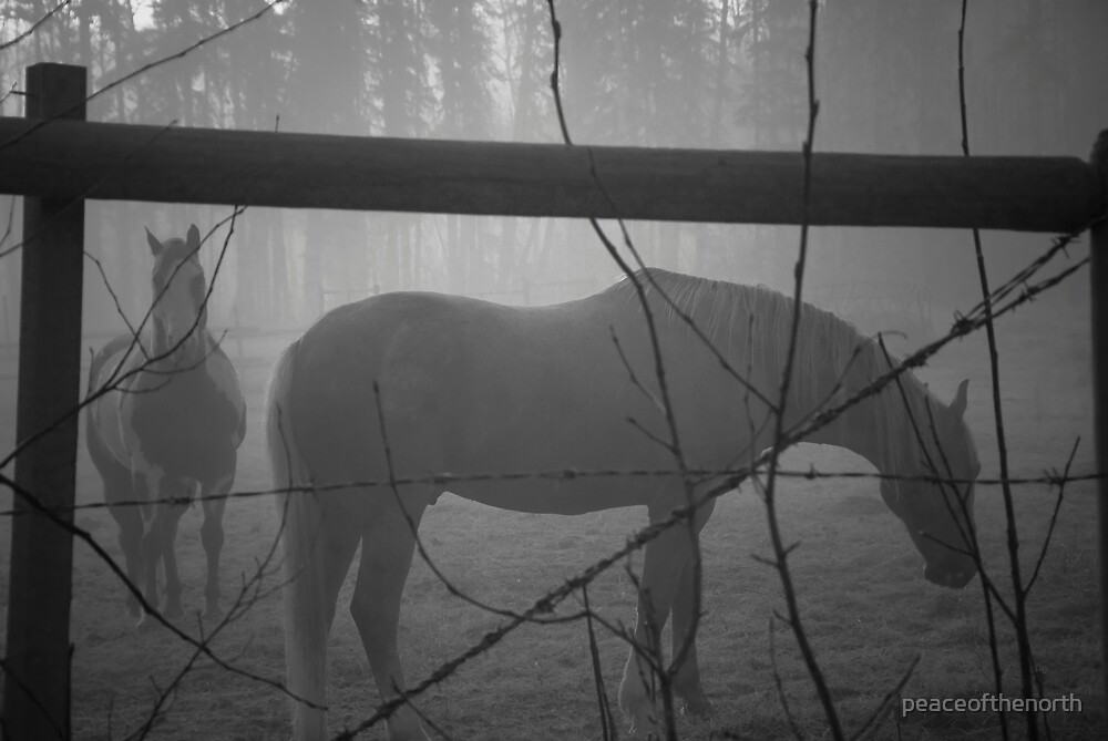 Early Morning Horses by peaceofthenorth