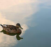 Morning Stillness by Lyle Hatch