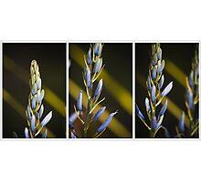 Diagonals Photographic Print