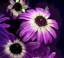 Purple Petals with Bee by Alma Lee