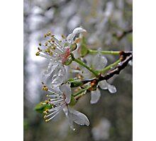 """Spring Freshness"" Photographic Print"