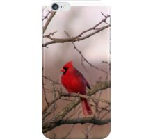 Red Cardinal iPhone Case/Skin