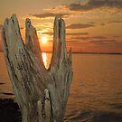 Driftwood sunset by Jacker